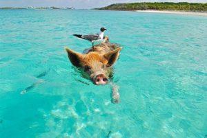 rejs bahamy